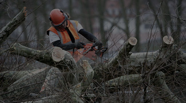 Thunder Bay Tree Service